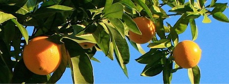 Citrus Planting Season | Green Living | CALS in the News | Scoop.it