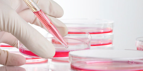 Better Animal Testing Alternatives Are Coming to U.S. | Medical Device and Microwave Ablation News | Scoop.it