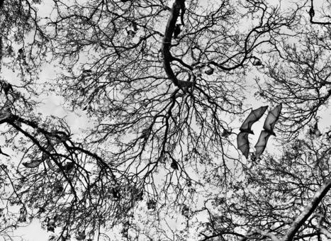 "Photographs from Sebastião Salgado's surprising new work, ""Genesis"" ...   Machines Pensantes   Scoop.it"