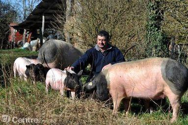 La production de porcs cul noir se développe en Limousin | Licence Agroéquipements | Scoop.it