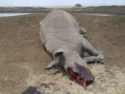 Poachers kill rhino in Nairobi Nat'l Park, highlighting risk to Kenya's wildlife   Kruger & African Wildlife   Scoop.it