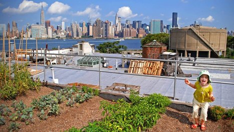 Urban farms won't feed us, but they just might teach us | ESL  Teaching at school | Scoop.it