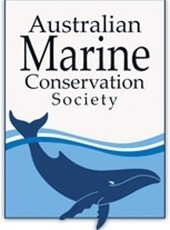Whale Of A Fail · Petitions ·  Australian Marine Conservation Society | GarryRogers NatCon News | Scoop.it