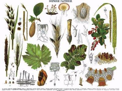 Agriculture raisonnée, intégrée, biologique, comment s'y retrouver ... | Agriculture durable 47 | Scoop.it