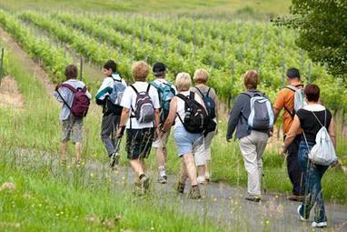 Bordeaux : le conseil général veut tracer des routes du vin | Viticulture | Scoop.it