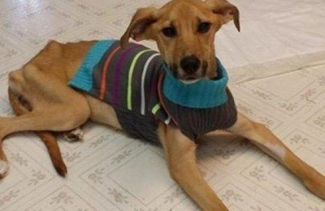 Un éboueur sauve un chien jeté dans une poubelle par son maître | CaniCatNews-actualité | Scoop.it