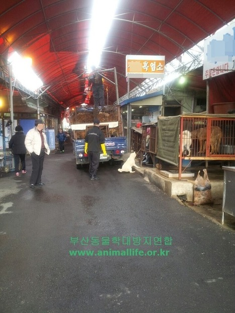 Scene of dog hanging at the Busan Gupo market!  Please join us in reporting this case! | Nature Animals humankind | Scoop.it