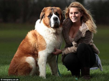 ¿Qué raza de perro es adecuada para ti? - Noticias24 - Noticias24 | tu perro | Scoop.it