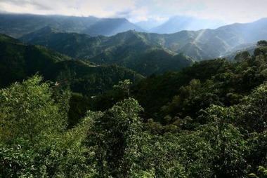 CDURABLE.info l'essentiel du développement durable : : Signer le Manifeste Trees4Climate : Nous Devons Agir Maintenant ! | CDURABLE.info | Scoop.it