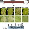 plant-pathogen interaction at the molecular level