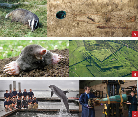 Critter Diggers - Archaeology Magazine | Current Events and History | Scoop.it