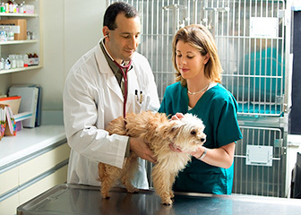 Experinced veterinarians  In Woodbridge Animal Hospital | Napa Valley Animal Hospital | Scoop.it
