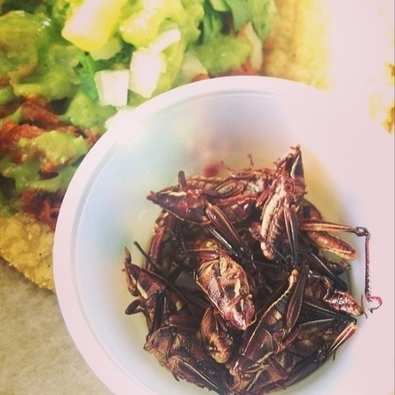 Eating Crickets - Why you will end up eating bugs, now or later (and where to do it now). | Entomophagy: Edible Insects and the Future of Food | Scoop.it