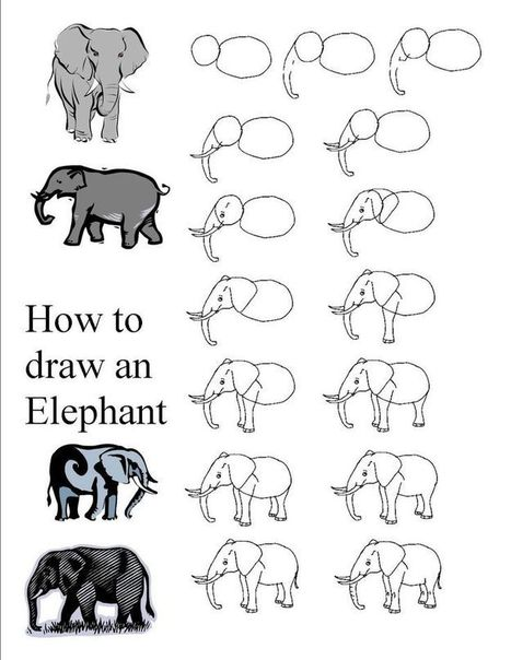 Elephant Drawing Tutorial | Drawing and Painting Tutorials | Scoop.it