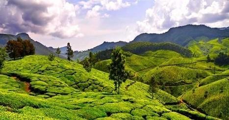 L'agriculture en Inde atteint des records sans pesticides | Questions de développement ... | Scoop.it