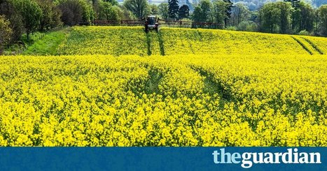 High pesticide levels on oilseed rape crops harm wild bees, scientists prove | Permaculture, Homesteading, Ecology, & Bio-Remediation | Scoop.it