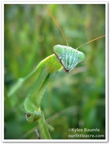 Our Little Acre: Summer Insect Notes   Annie Haven   Haven Brand   Scoop.it