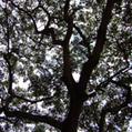 Colombia registra alza sostenida en reforestación - SciDev.Net | The Agrobiodiversity Grapevine | Scoop.it