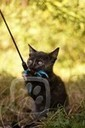 Kočky, kočičky, koťata – Miciny.cz | project manager and cats | Scoop.it
