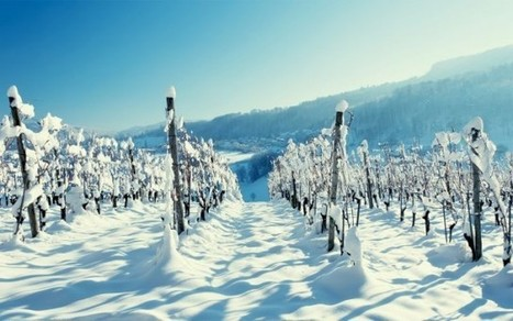 Global warming forging new cool climate regions | Fine Champagne Magazine | Scoop.it