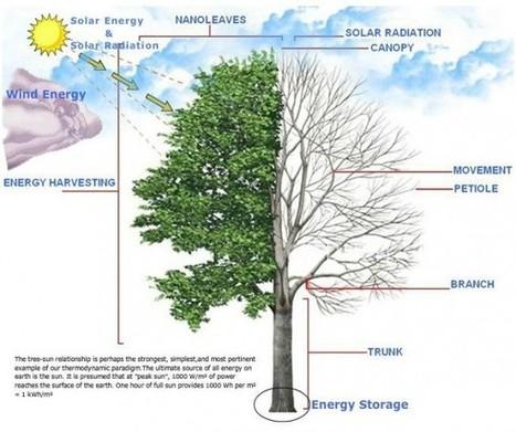 SolarBotanic : des arbres artificiels à récupération d'énergie solaire et éolienne | Actinnovation© | topic | Scoop.it