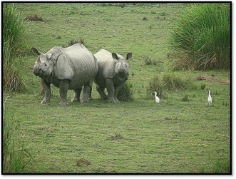 Top interesting facts about the one-horned rhino - Greenfudge.org | Save our Rhino and all animals...this is what it looks like!!!!! | Scoop.it