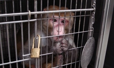 China Southern Airlines Fined For Transporting Monkeys To US | Global Animal | Nature Animals humankind | Scoop.it