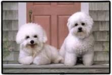 Simple strategies for dog training salt lake city - My Glam Network | dog grooming utah | Scoop.it
