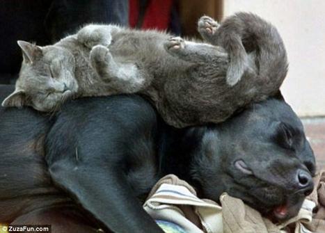 En fotos, el sueño de los gatos | Cubadebate | apaga la tele | Scoop.it