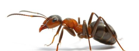 Pest Control Utah | Pest Control Specialists | bestpestcontrolutah.com | Scoop.it