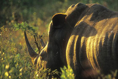 Lanseria Airport joins anti-poaching fight | Wildlife Trafficking: Who Does it? Allows it? | Scoop.it