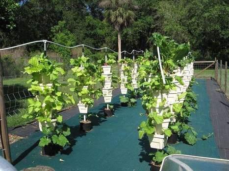 Flagler Extension program delves into hydroponic gardening - Daytona Beach News-Journal | Gardening | Scoop.it