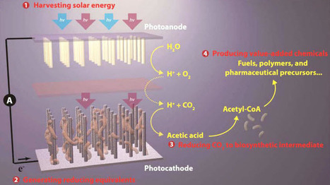 Artificial photosynthesis for making fuels, plastics, and medicine | Impact Lab | Futurewaves | Scoop.it