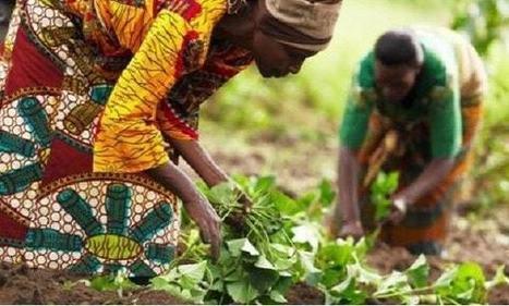 La stratégie de développement du secteur rural au Cameroun | Questions de développement ... | Scoop.it