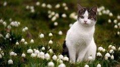 Limoges: en voulant sauver le chat, il provoque une fuite de gaz !  - France 3 Limousin   CaniCatNews-actualité   Scoop.it