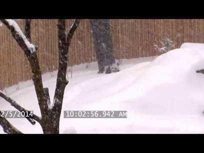 Toronto Zoo Giant Panda Enjoys Epic Snow Fall | staged | Scoop.it