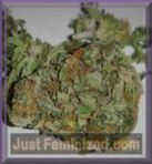 Just Feminized.com: All types of cannabis at the right price | Justfeminized | Scoop.it