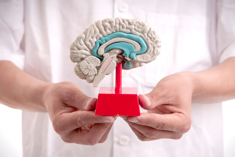 Forgetting keeps us sane | Health and Neuroscience | Scoop.it