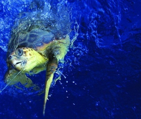 Oceana Magazine: Wasted Catch | All about water, the oceans, environmental issues | Scoop.it