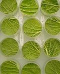 De nouvelles missions pour l'Anses concernant les produits phytopharmaceutiques, matières fertilisantes et supports de culture   AgroParisTech Alimentation Santé Environnement   Scoop.it