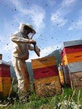 Région Rhone Alpes, alerte rouge pour les abeilles ! | Toxique, soyons vigilant ! | Scoop.it