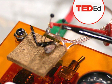 The cockroach beatbox | Video on TED.com | Music to work to | Scoop.it
