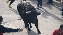 Spanish bullfighting arena has entered the political one - ITV | AC Affairs | Scoop.it