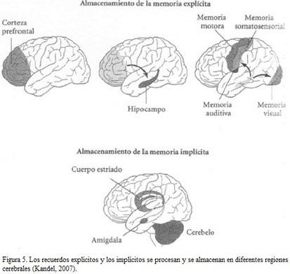 Seminario de Neuroeducación | educacion | Scoop.it