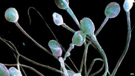 'Robot Sperm' Controlled by Magnets   Biomimicry   Scoop.it
