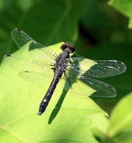 Stress Kills... Dragonflies   Quite Interesting News   Scoop.it