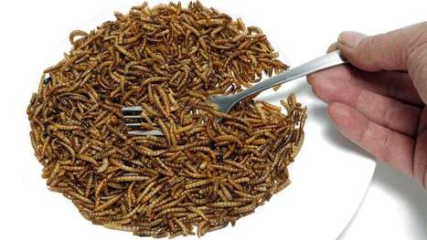 We Have Italian, Blue Cheese, Ranch … Roach? Insect Oil's Rich in Omega-3 Acids! | Entomophagy: Edible Insects and the Future of Food | Scoop.it