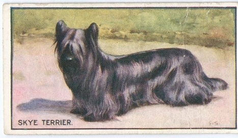 Cigarette Cards: Breeds of Dogs (1914) | My Umbrella Cockatoo, TIKI | Scoop.it