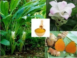 Thai Herbs Health Benefits | Arun Thai Natural Health | Scoop.it