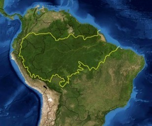 Amazon Rainforest - Geography Reference Library - redOrbit | Amazon Rainforest | Scoop.it